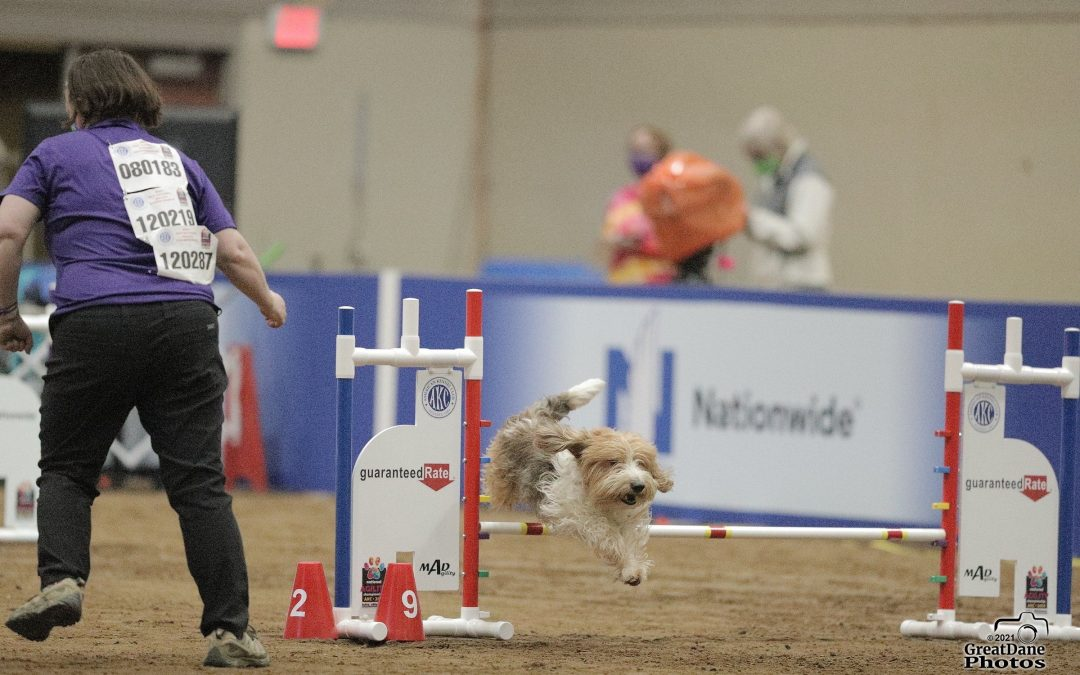 The Clever Hounds at the National Agility Championship